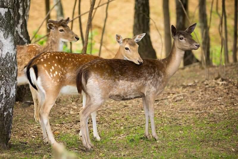 Брошенных животных привезли в парк-отель «Орловский».